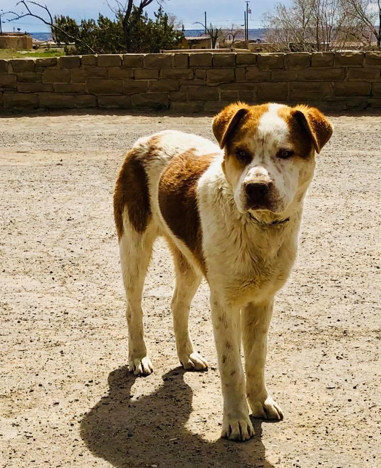 rural outreach coconino humane dog