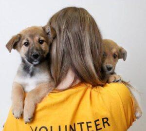volunteer coconino humane
