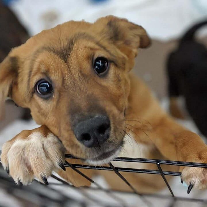 Adoptable dogs and puppies